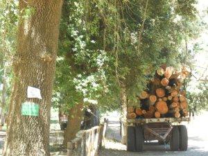 Un camion pieno di legna a Margherita
